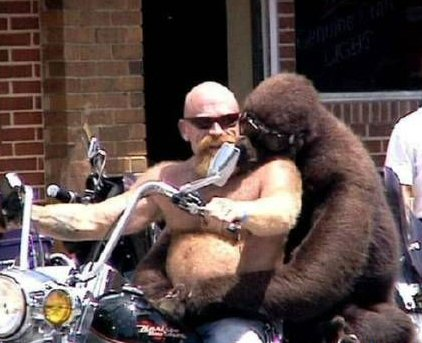 monkey_motorcycle.jpg